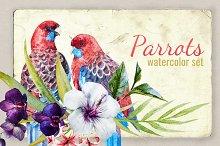 Watercolor Set Tropical Parrot