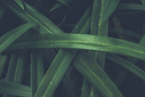 Natural green tropical leaves