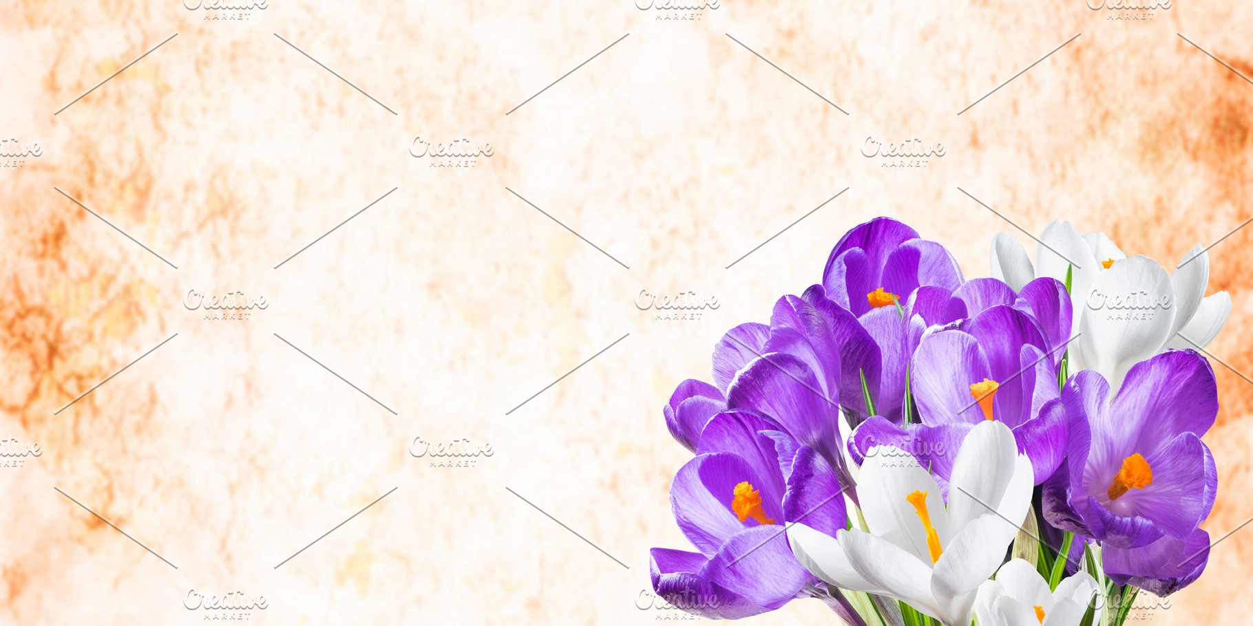 Background With Crocus Flowers