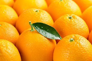 Ripe oranges. Close up.