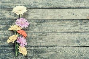 Vintage gerbera flowers