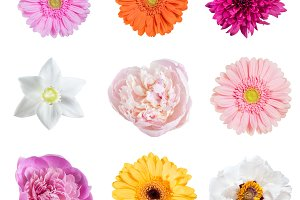 Spring flowers isolated