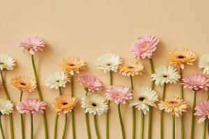 Spring composition of fresh gerberas on a yellow paper background.