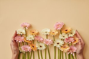 Many different gerberas female hands are held on a yellow paper background.