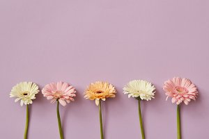 Beautiful composition from different gerberas on a pink paper background