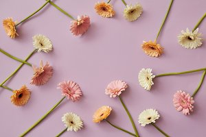 Creative pattern of various colorful gerberas on a pink paper background
