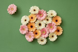 Composition from fresh different gerberas on paper green background