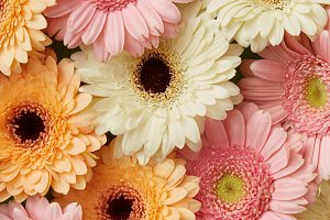 Floral background of different beautiful gerberas
