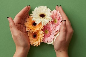 Female hands hold different gerbera flowers on a green paper background