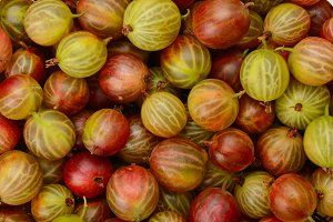 Green and red gooseberry fruit