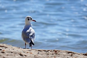 Seagull standing on the sand