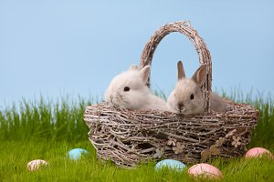 Easter rabbits in basket on grass