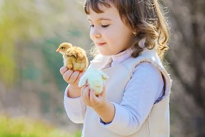 The child holds a chicken