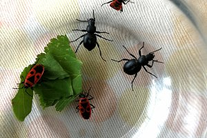 Beetles in a glass