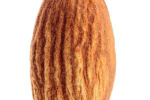 One almond isolated on white background macro