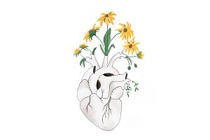 Painted Flowering Heart