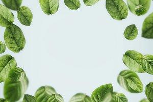 Flying green leaves frame