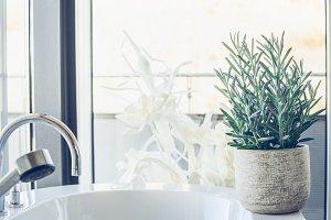 Hose plant succulent in bathroom