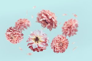 Flying pastel pink flowers