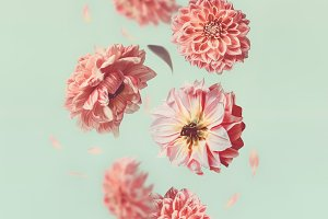 Flying flowers and pink petals