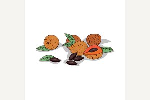 Isolated clipart Sapote