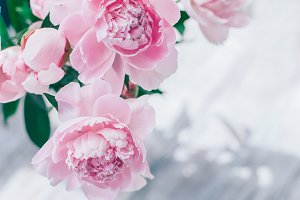 Pink peony background copy space