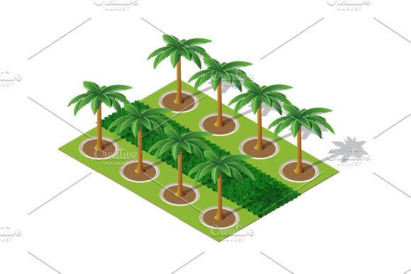 Palm Of A Isometric Park