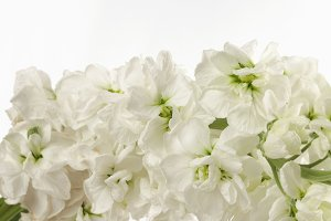 Flower white bouquet background.