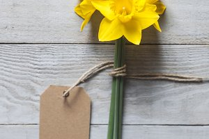 Yellow narcissus flowers and card