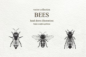 Bee Vector Collection