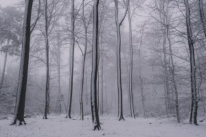 Snowy Forest with high Trees