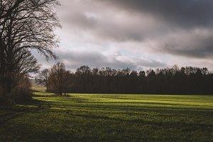 Warm Autumn Light over Grass Field