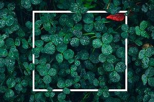 Conception art green grass
