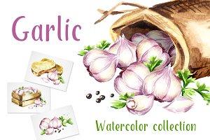Garlic. Watercolor collection