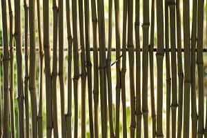 Reed fence in backlight.