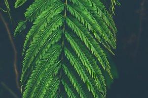 Fresh tropical Green leaves