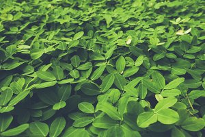 Beautiful green small leaf close up