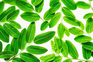 Background of green leaves on white.