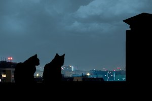 Silhouettes of cats on the roof. Night city away