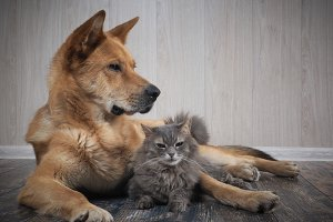 Friendship dogs and cats
