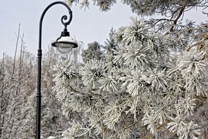 A modern street lamp and a pine branch covered with frost