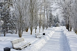 Winter city landscape in a snow-covered park