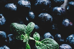 Fresh wet blueberries with green lea