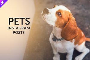 Pets Instagram Templates