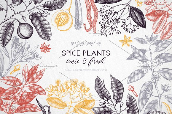 Vintage Spice Plants Collection