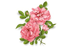 Realistic vector pink rose. 3d roses