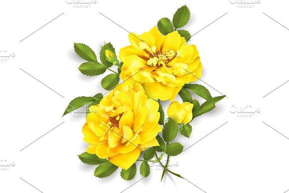Realistic Vector Yellow Rose 3D Roses