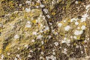 Lichen on castle wall