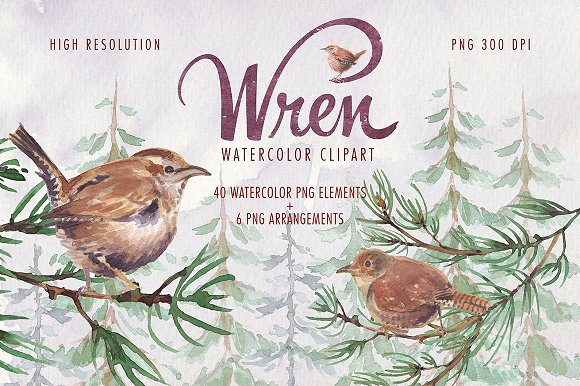 Watercolor Wren Bird Clipart Set