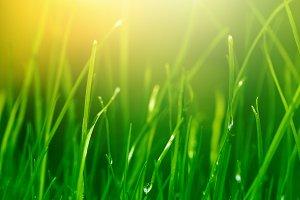soft green grass background